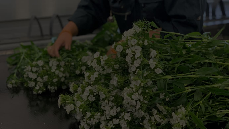 千葉県南房総の花