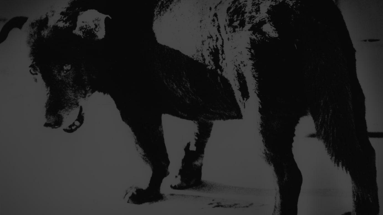 代表作「三沢の犬」