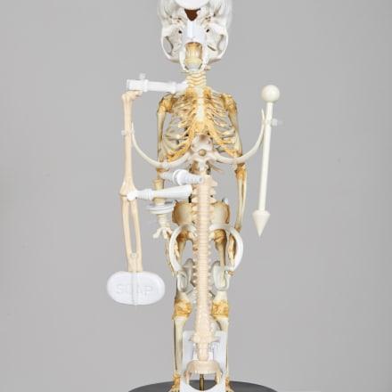 Splash and Flakes( Skeleton/2017 ) #2, 2017, Plastic, steel, and wooden objects, skeleton models, 43 x 17 x 17 cm courtesy Eslite Gallery Copyright Teppei Kaneuji.