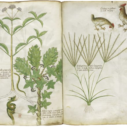 「薬草書」15世紀 大英図書館蔵 ©British Library Board