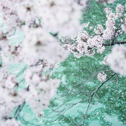 Untitled ©mika ninagawa, Courtesy of Tomio Koyama Gallery