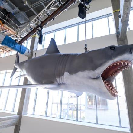 ロサンゼルスのアカデミー映画博物館に設置された「ブ ルース・ザ・シャーク(Bruce the Shark)」インスタレ ーション。©Academy Museum Foundation