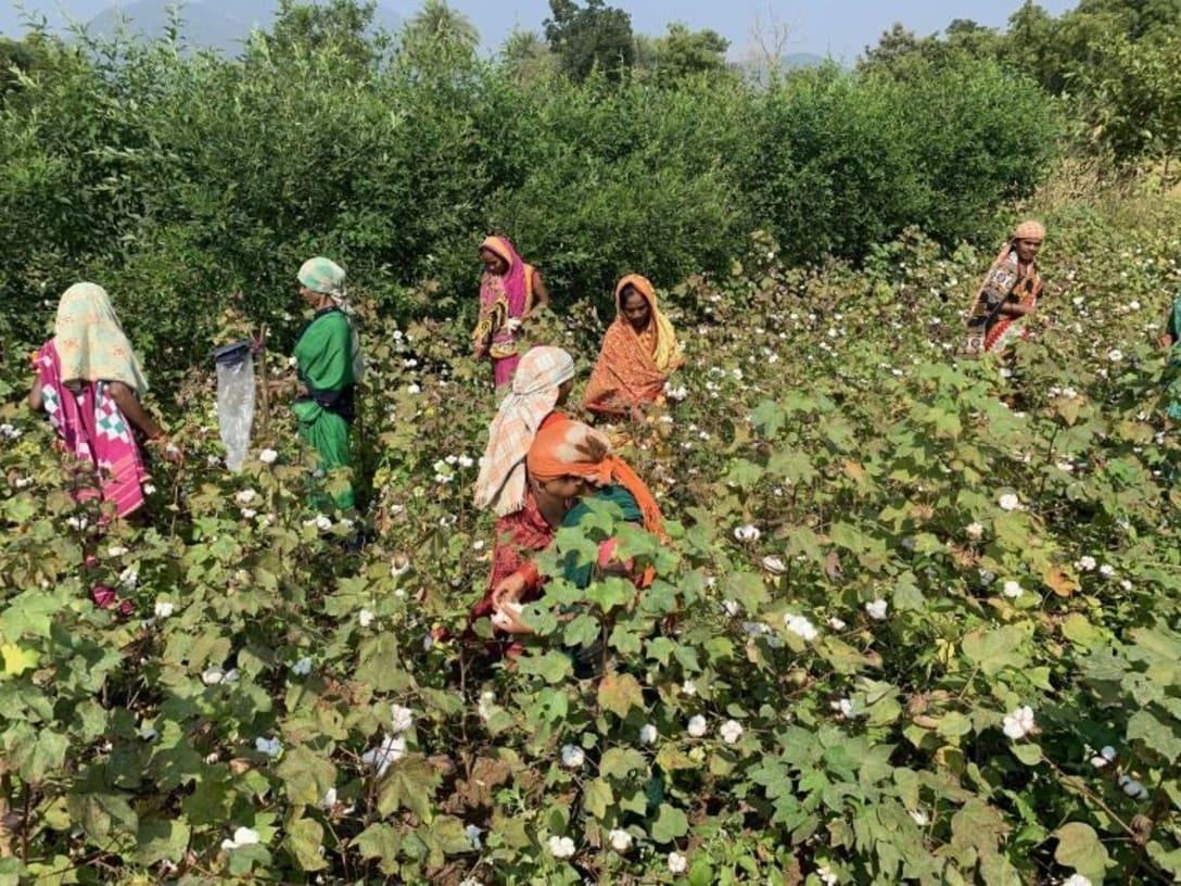 オーガニックコットンを栽培する農家。大部分はその他の作物を輪作する小規模な農家という