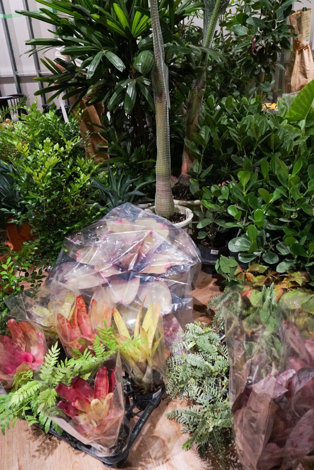 観葉植物は大型だと15万円程度するものも Image by FASHIONSNAP