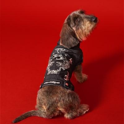 ディーゼル 犬 ドッグ